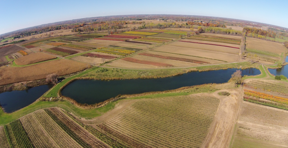 2014 fall colours on the Nursery